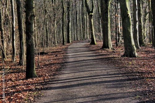 Photo  Amsterdam forest