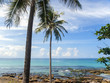 Palm trees line the beachfront on the island of Ko Kut in eastern Thailand