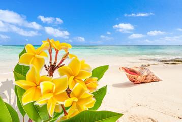 Obraz na Szklebouquet de frangipanier et coquillage sur plage de l'île Maurice