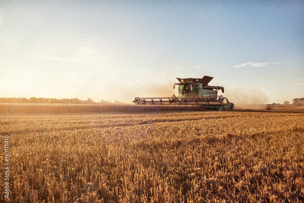 Fototapety, obrazy: Mähdrescher bei der Weizenernte