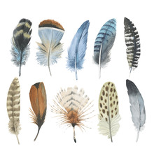 Vector Bird Feather From Wing ...