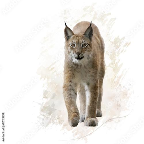 Wall Murals Lynx Lynx portrait watercolor