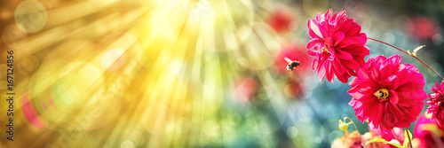 Obraz Summer background, Dahlia, Bumblebees - fototapety do salonu