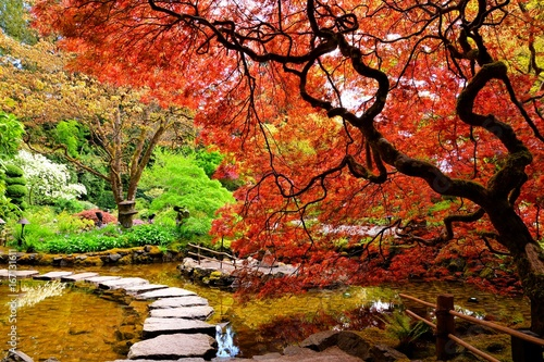 La pose en embrasure Brique Pond with overhanging red Japanese maples during springtime, Butchart Gardens, Victoria, BC, Canada