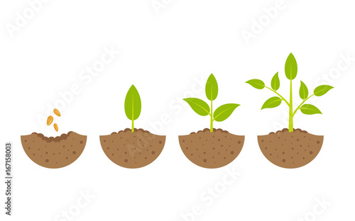 growing plant in process. on white background. Fototapete