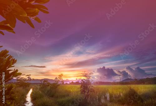 Foto auf Gartenposter Hochrote Colorful sky over rice field
