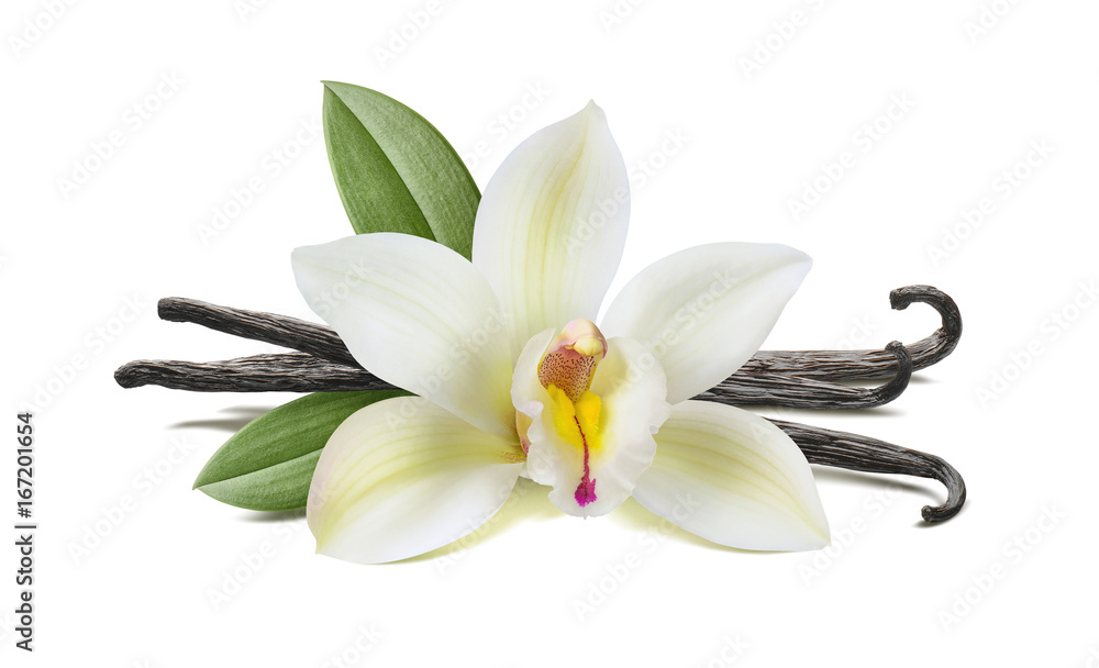 Fototapety, obrazy: Vanilla flower, pods, leaves isolated on white