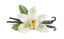 Vanilla Flower, Pods, Leaves I...
