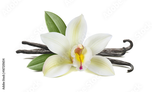 Keuken foto achterwand Orchidee Vanilla flower, pods, leaves isolated on white