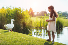 Little African American Girl Feeding Goose Near Lake In Park With Backlit