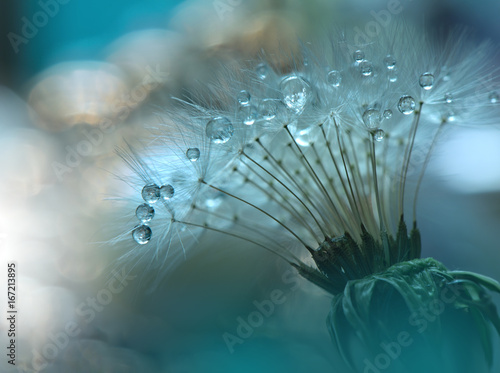Abstract Macro Photo With Dandelion And Water Dropsartistic