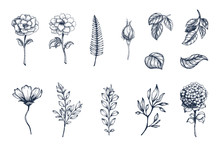 Vector Collection Of Hand Drawn Plants. Botanical Set Of Sketch Flowers,  Branches And Leaves