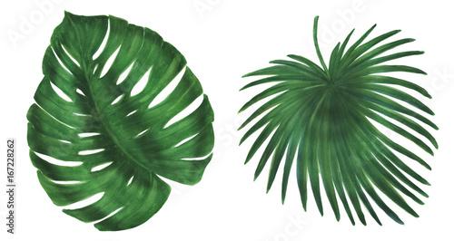 Foto  Watercolor painting tropical leaves set