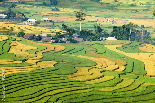 Garden Poster Rice fields Rice fields on terraced of Mu Cang Chai, YenBai, Vietnam. Rice fields prepare the harvest at Northwest of Vietnam