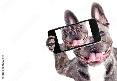 Foto op Plexiglas Franse bulldog French Bulldog dog Does selfie on the phone