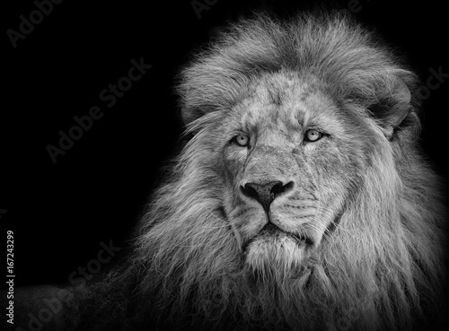Tuinposter Leeuw Lion portrait in black/white
