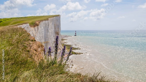 Fotografie, Obraz  Seven Sisters National Park, view of the white cliffs and beech , East Sussex, E