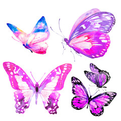 beautiful butterflies, set,watercolor,isolated on a white