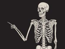 Human Skeleton Finger Pointing...
