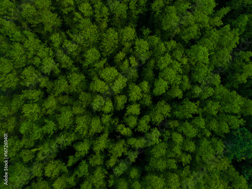 Green forest from above