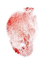 Red Fingerprint On White Background, Macro