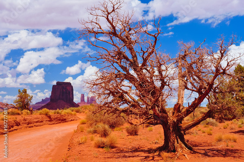 Poster Oranje eclat Dry tree and Monument valley landscape, USA