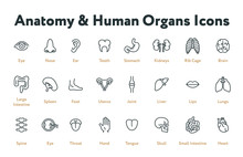 Anatomy Human Body Internal Organs Biology Minimal Flat Line Stroke Icon Set. Stomach, Kidneys, Rib Cage, Brain, Intestine, Spleen, Uterus, Liver, Lungs, Spine, Throat, Heart.