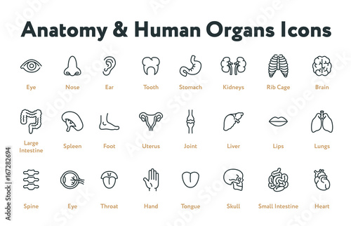 Fényképezés Anatomy Human Body Internal Organs Biology Minimal Flat Line Stroke Icon Set