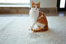Cute Cat Sitting On Carpet Nea...