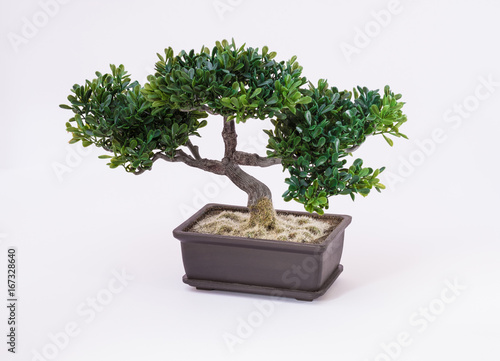 In de dag Bonsai Bonsai tree on white background