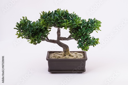 Tuinposter Bonsai Bonsai tree on white background