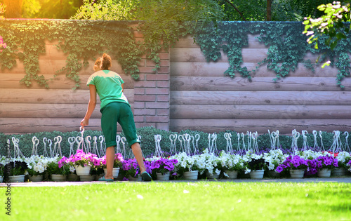 Foto op Canvas Lavendel Landscape design. Flower market. The gardener equips the plot in the yard of the house in a sunny summer day.