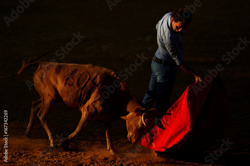Spanish bullfighter Rafael Tejada performs a pass to a heifer during