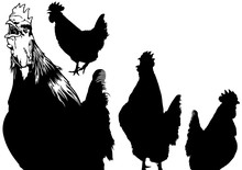 Rooster Silhouettes Set - Blac...