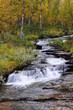 Wildbach im Birkenfjellwald, Herbst, Schweden