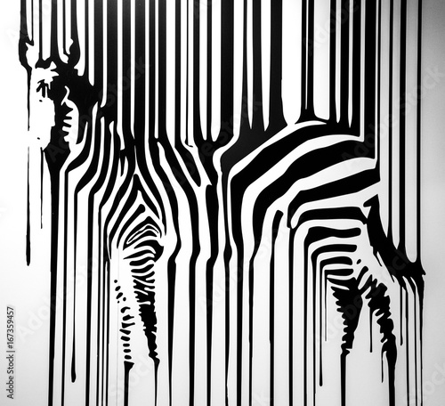 Fototapeta zebra obraz