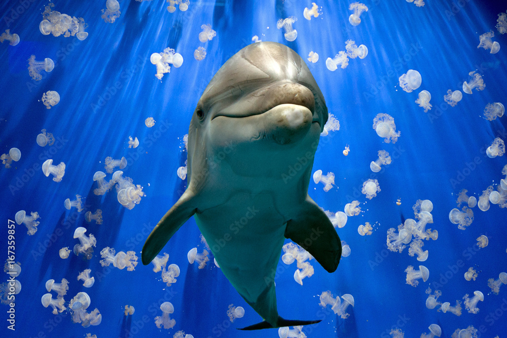 фотографія  dolphin underwater on reef close up look