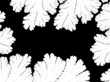 Monochrome, Black And White Gr...