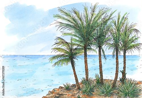 morze-karaibskie-wybrzeze-z-palmami
