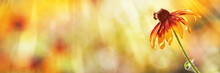 Coneflower, Bee, Summer Background