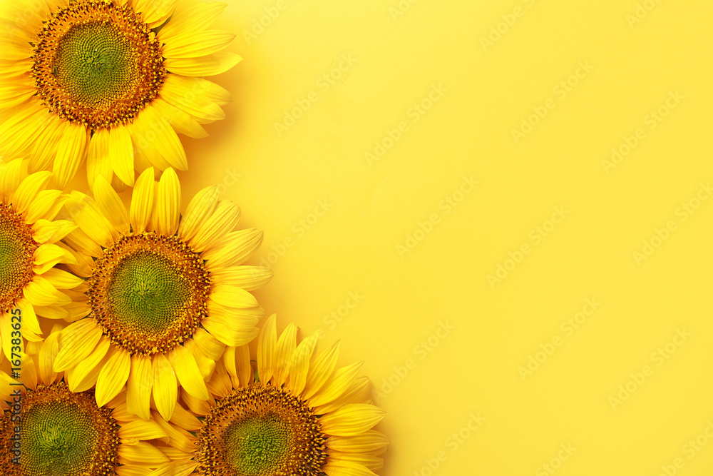 Sunflowers on a yellow background. Copy space. Top view