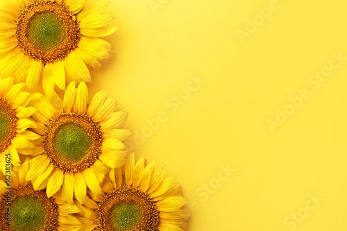 Plakat Słoneczniki na żółtym tle. Skopiuj miejsce. Widok z góry