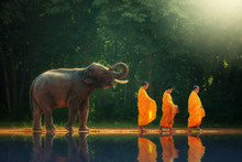 Elephant Walking Behind Monks,...