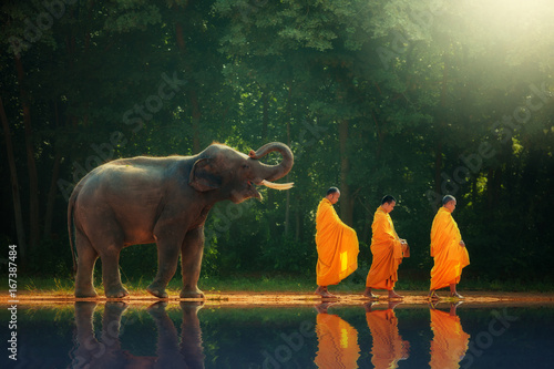 Fotografie, Obraz Elephant walking behind monks, Thailand