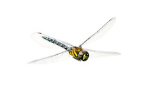 Eine Libelle Im Flug (freigest...