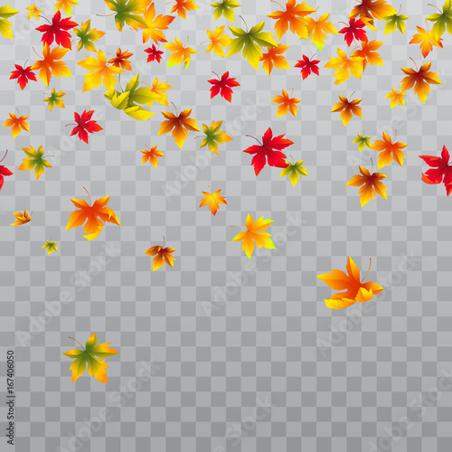 Vector seamless horizontal border with falling maple leaves. Autumn decoration for banners and flyers season design. Isolated on the transparent background. Wall mural
