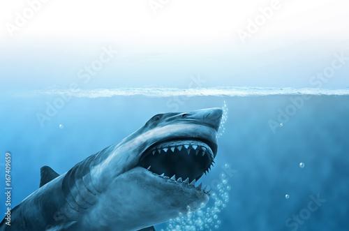 Photographie Hai