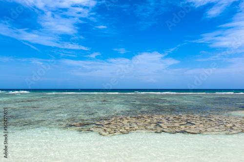 Beautiful Coral Near The Tropical Beach At Freedom Beach Koh Tao In
