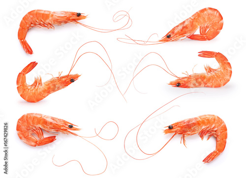 Cooked shrimp isolated on white background.