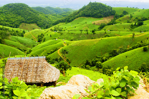 In de dag Lime groen Soybean field ripening on mountain and stone, agricultural landscape.